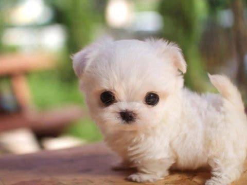 cachorros mas bonitos