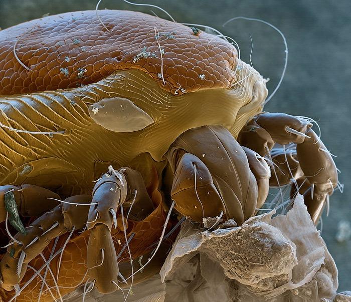 Cómo se ven los animales bajo el microscopio
