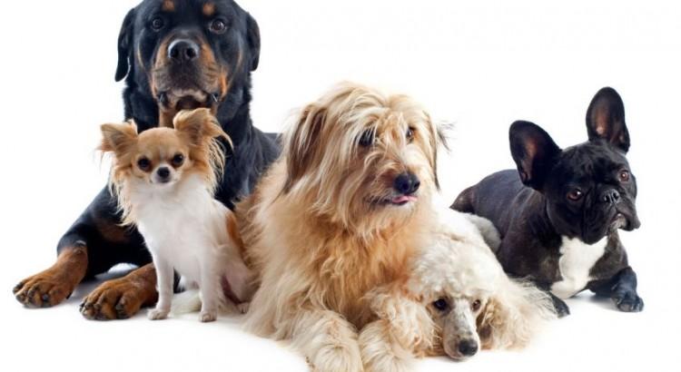 Curiosidades sobre los perros-3