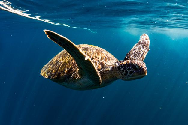 Curiosidades de las tortugas-1