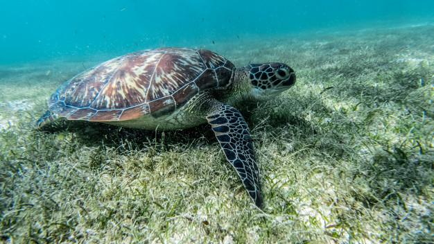 curiosidades de las tortugas- 2