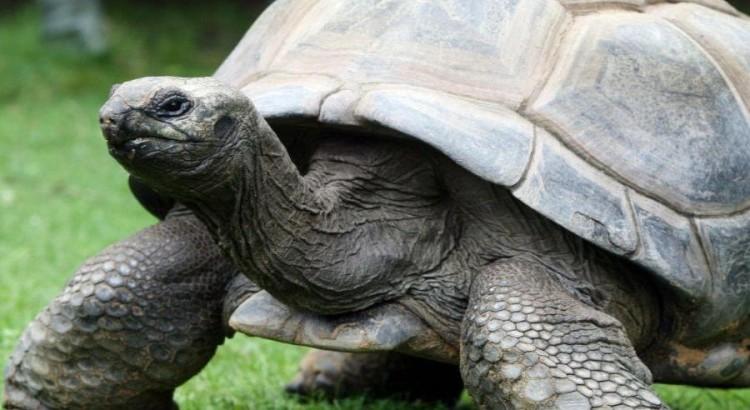 curiosidades-de-las-tortugas-3