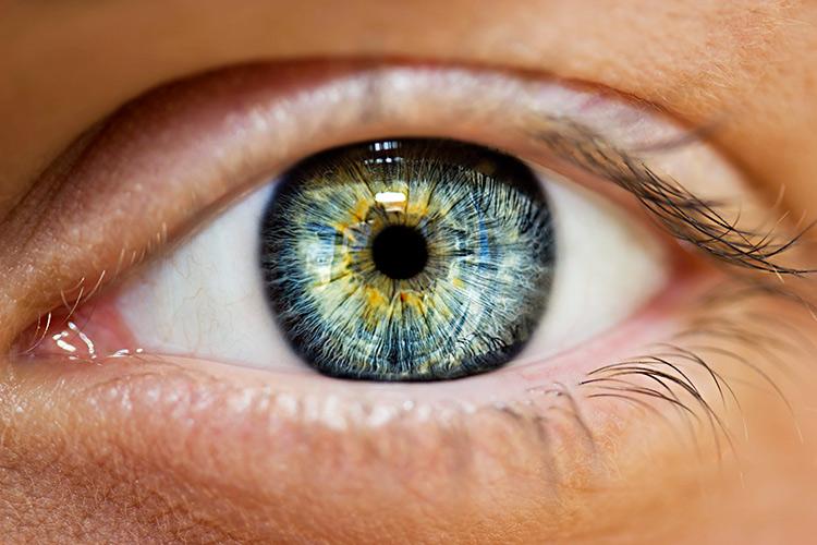 El iris y el color de los ojos-curiosidades sobre los ojos