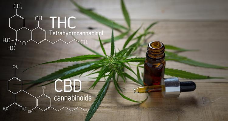compuestos quimicos marihuana-curiosidades sobre la marihuana